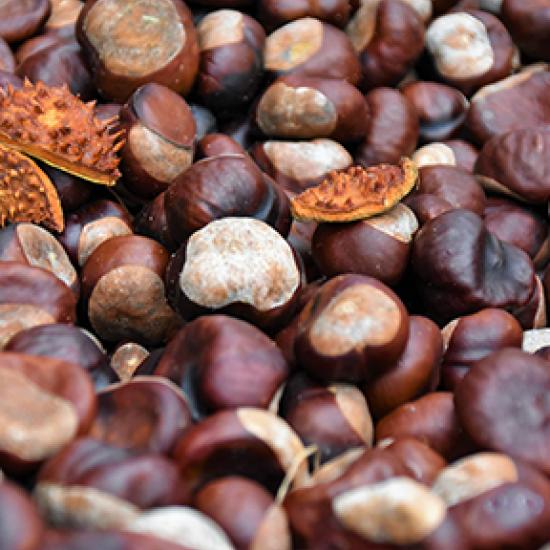 bunch of chestnuts