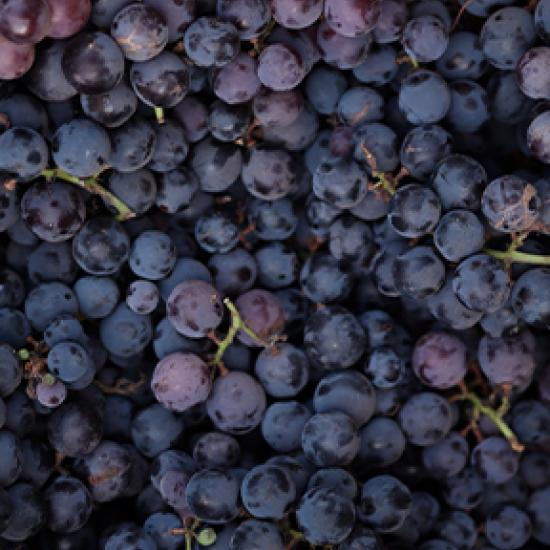 Close-up image of purple grapes.