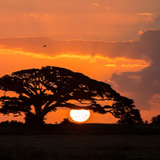 Image of red sunset with black tree in front