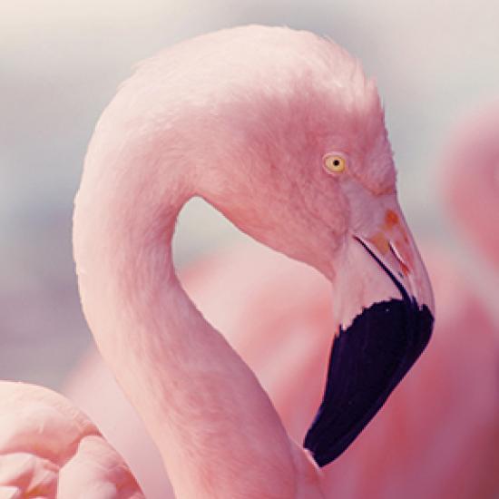Image of pink flamingo head